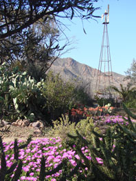 The garden of dreams Cabo de Gata